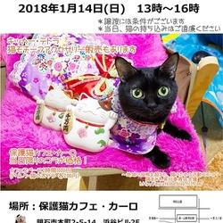 明石譲渡会・猫まみれwithカーロ