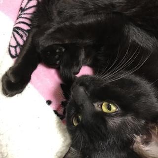 里親募集!黒猫