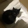 黒猫の子猫ちゃん!里親さん募集中です!