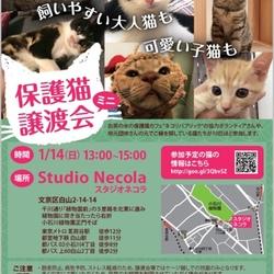 〜飼いやすい大人猫も可愛い子猫も〜保護猫ミニ譲渡会@東京都小石川植物園そば
