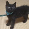 生後4ヶ月の黒猫