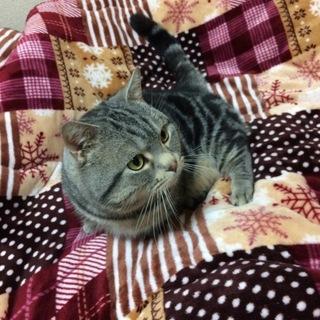 至急里親さん募集。寂しがり屋の猫ちゃんです