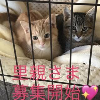 お母さんをTNRした仲良し子猫5匹