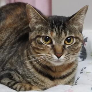 野性味あふれる美しい柄の美猫さん