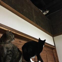 脚黒猫再び参上