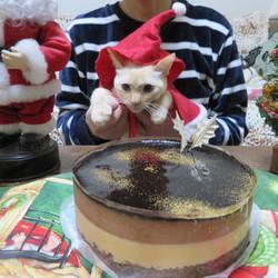 コタロウのはじめてのクリスマス・ケーキ