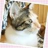 7ケ月☆可愛い三毛猫のアルミンちゃん サムネイル2