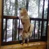 外の鹿が気になって仕方ない