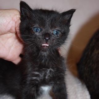 動画ありかわいい黒猫ろんちゃん