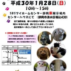 静岡市で猫の譲渡会です