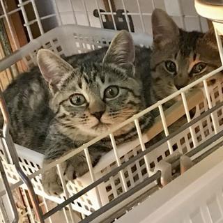 一緒に☆美猫姉妹ムニちゃんとショコラちゃん