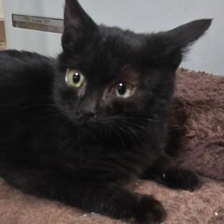 人大好き黒猫ちゃんです