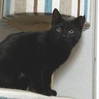 推定4ヶ月!黒猫 女の子 小都ちゃん