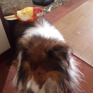 不注意で遭遇…でも、インコが犬に懐いた