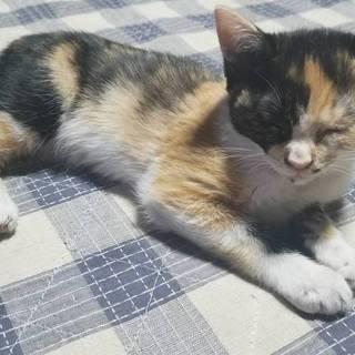 生後、5ヶ月になる三毛猫☆