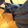 子猫ちゃんの里親募集中♪ サムネイル2