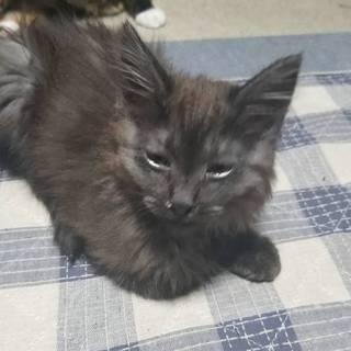 生後、5ヶ月になる子猫