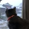 初めて雪見たよ〜(*^ω^*)