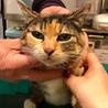 なつこい三毛猫、由美ちゃんを家族に サムネイル2