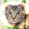 甘えん坊3ヶ月ゴロゴロ大音量抱っこ猫キジトラサビ琴