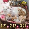 甘えん坊3ヶ月ゴロゴロ大音量抱っこ猫キジトラサビ琴 サムネイル5