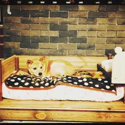 「今年初めての病院&ベッド交換‼︎」サムネイル3