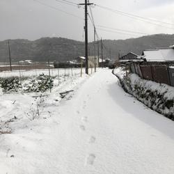 雪降って猫増える