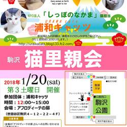 Evaさん主催「駒沢・猫里親会」Eva×浦和キャッツ