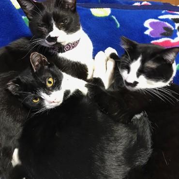三人元気に 猫団子♪