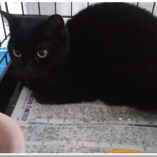 寒い北見保健所にいる黒猫ちゃん