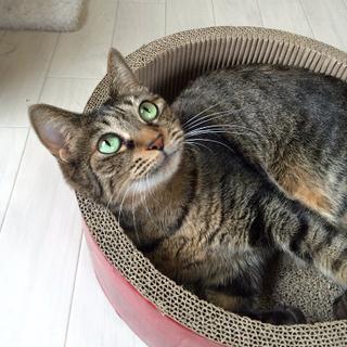 スリゴロお膝猫♪マリン 8歳