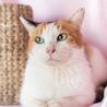 懐こい三毛猫の みのりちゃん♪ サムネイル2