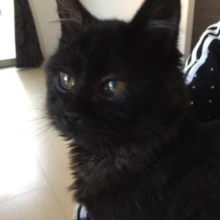 もふもふ子猫の黒猫くん