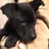 ピタゴラスイッチ兄妹犬のペインティー サムネイル4