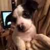 ピタゴラ兄妹犬(スポッティー) サムネイル3