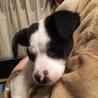 ピタゴラ兄妹犬(スポッティー) サムネイル4