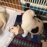 ピタゴラ兄妹犬(スポッティー) サムネイル6