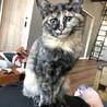 生後4ヶ月猫☆サビ♀ サムネイル3
