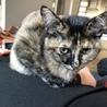 生後4ヶ月猫☆サビ♀ サムネイル4