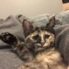 生後4ヶ月猫☆サビ♀ サムネイル5