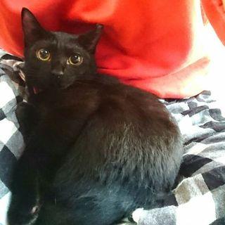 可愛い黒猫のキキちゃん♪