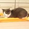 人恋しい盲目の猫ちゃん サムネイル3