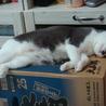 人恋しい盲目の猫ちゃん サムネイル4