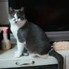 人恋しい盲目の猫ちゃん サムネイル5