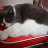 人恋しい盲目の猫ちゃん サムネイル7