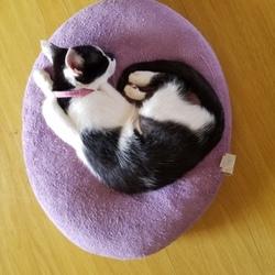 「猫紹介」サムネイル1