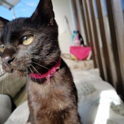 「猫紹介」サムネイル2