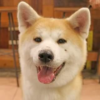 子供好き♪秋田犬こまちちゃん☆