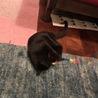 個性が光る♡ツヤツヤスレンダーな黒猫 サムネイル5