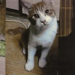 かわいい生後半年3兄弟猫里親募集!